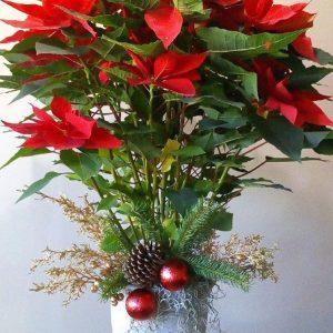 Nochebuena Elegante